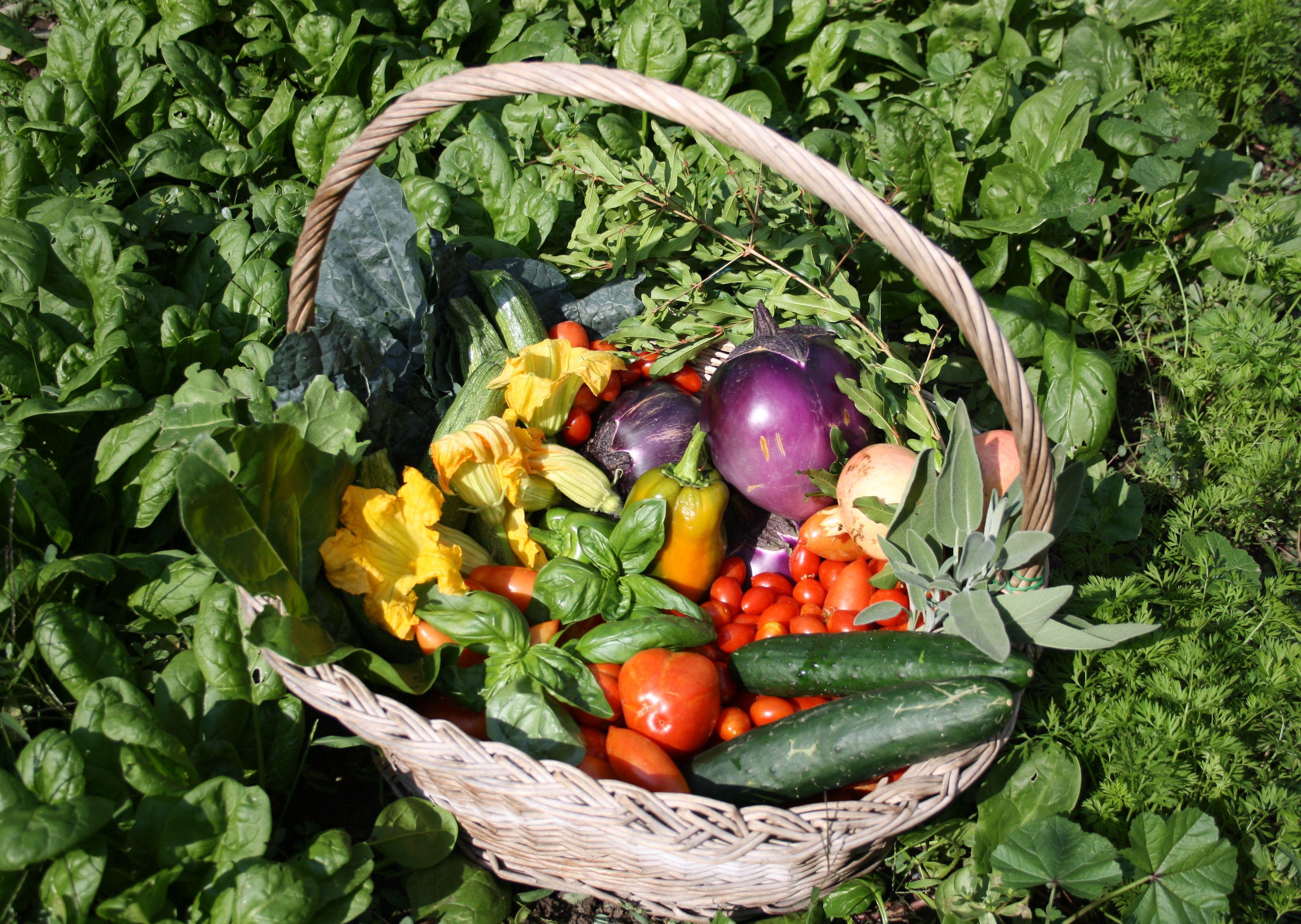 Arezzo meteo prepariamo l orto per l inverno - L orto in giardino ...
