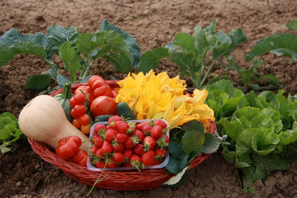 Arezzo meteo orto e giardino autunno for Orto giardino