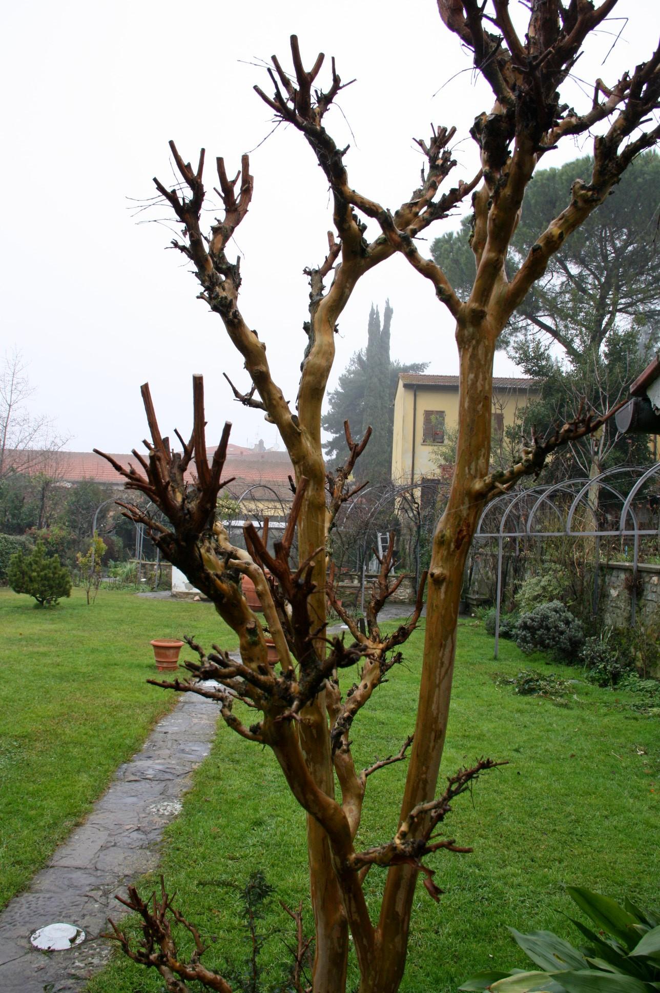 Arezzo meteo orto e giardino d inverno for Piante da frutto in giardino