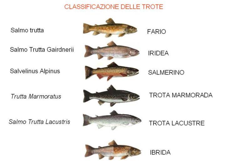 Arezzo meteo ringraziamo la troticoltura puccini for Vasche per allevamento trote