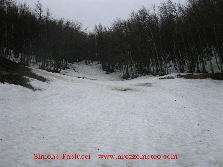 Monte Falco 15