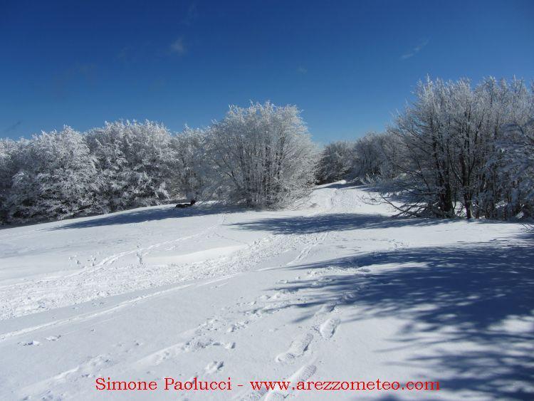Campigna Monte Falco 14
