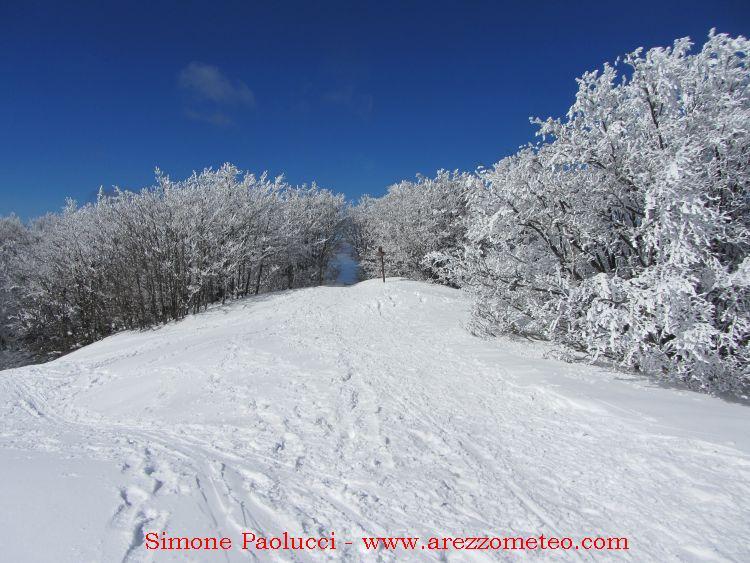 Campigna Monte Falco 23