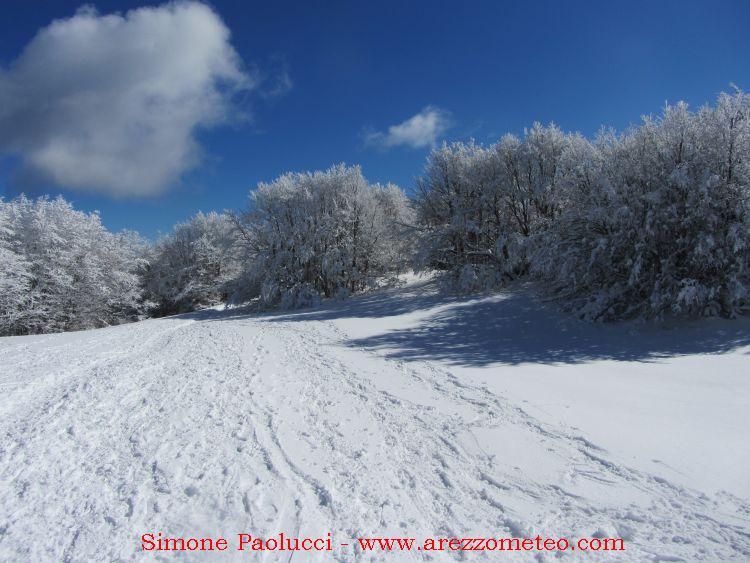Campigna Monte Falco 24
