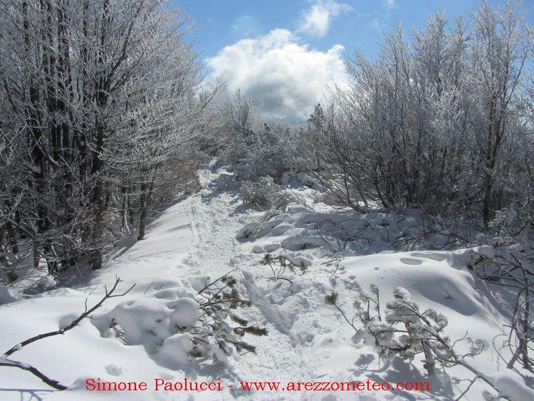 Campigna Monte Falco 5