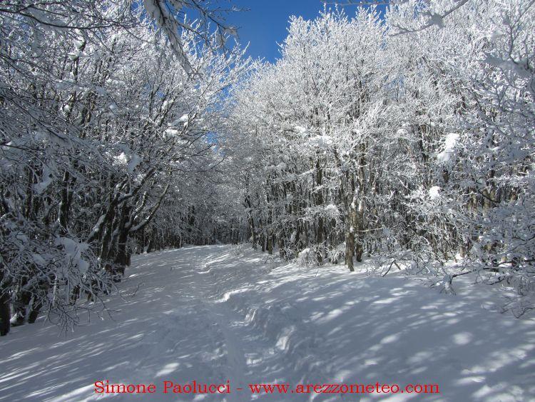 Campigna Monte Falco 8