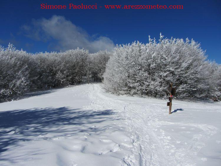 Campigna Monte Falco 9