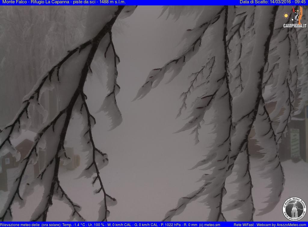 Monte Falco - Campigna 6