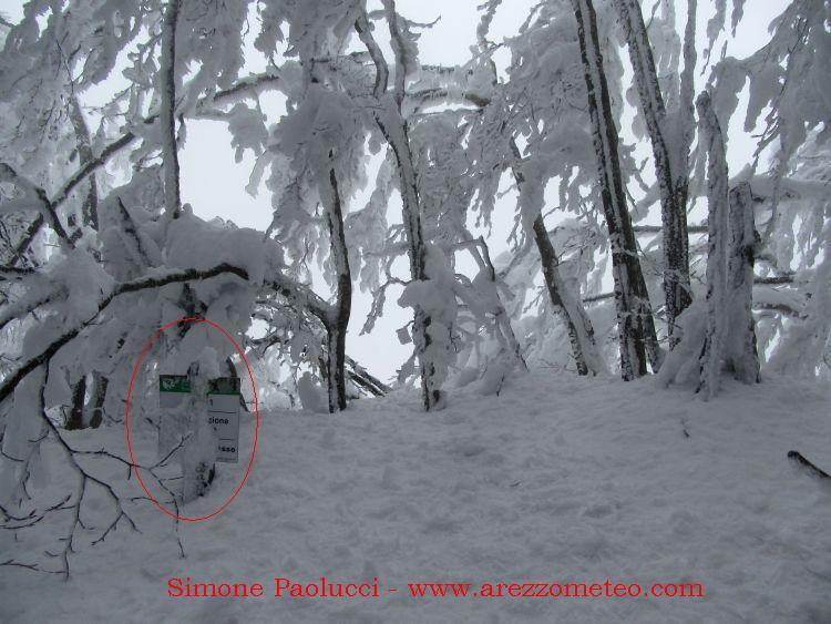 Monte Falco e Falterona 27