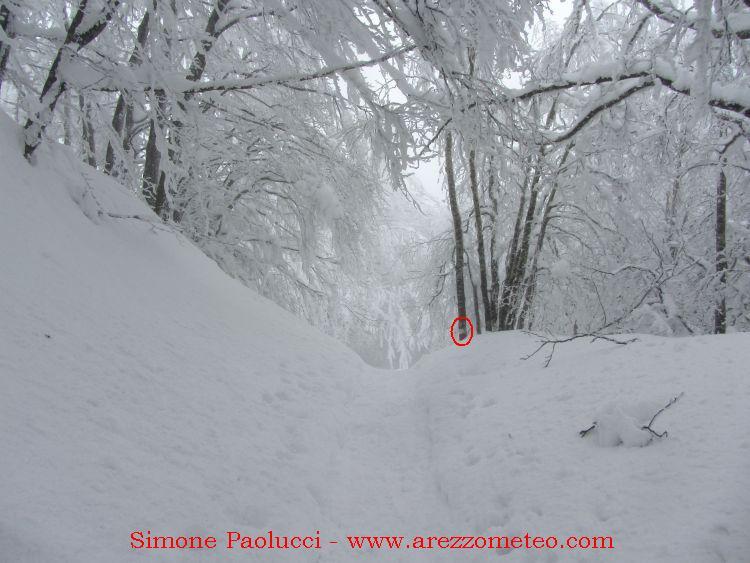 Monte Falco e Falterona 28
