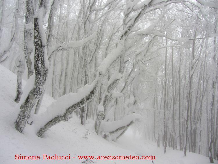 Monte Falco e Falterona 34