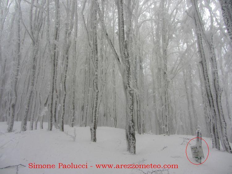 Monte Falco e Falterona 37