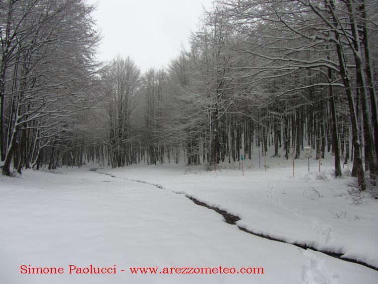 Monte Falco Campigna 1