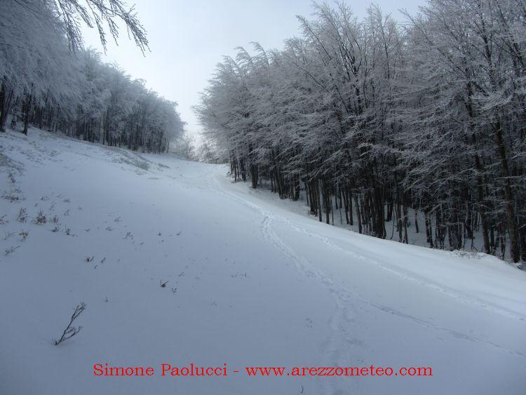 Monte Falco Campigna 12