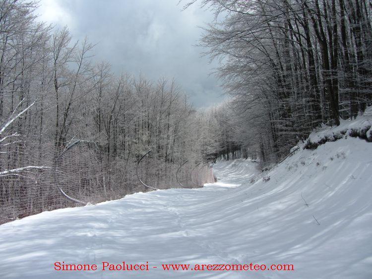 Monte Falco Campigna 14
