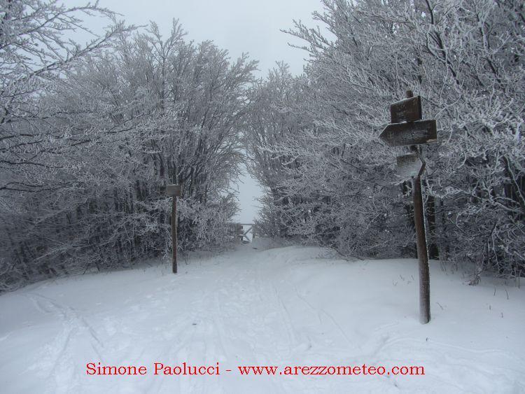 Monte Falco Campigna 6