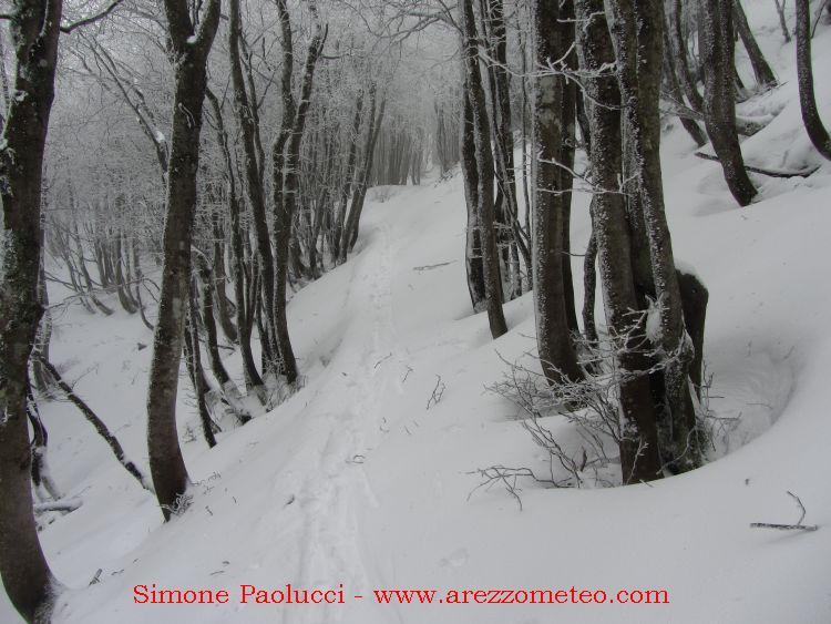 Monte Falco Campigna 7
